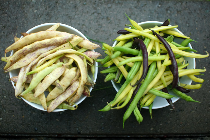 Dragon beans on left, mixed beans on the right