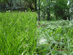 The lawn: before and after